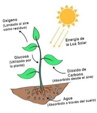 fotosíntesis y oxígeno